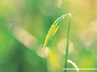 Dewdrops & Green Leaves (Vol.2)30 pics